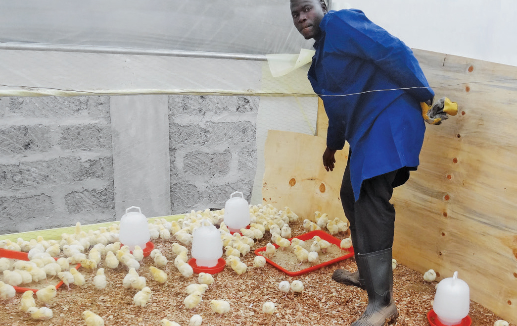 Chicken Farming schools in Kenya